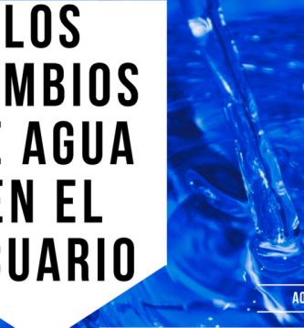 La importancia de los cambios de agua en el acuario