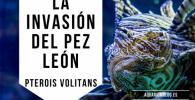 LA INVASIÓN DEL PEZ LEÓN VENENOSO PTEROIS VOLITANS
