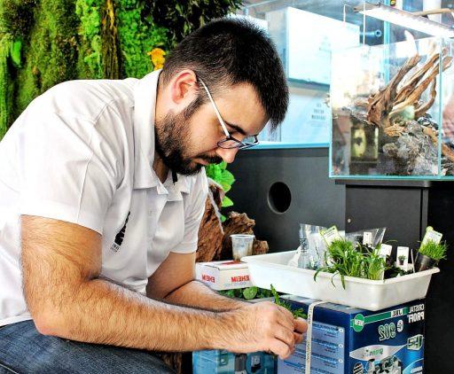 Preparando plantas para el montaje de acuarios