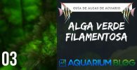 alga filamentosa verde