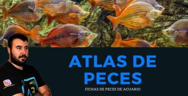 ATLAS DE PECES