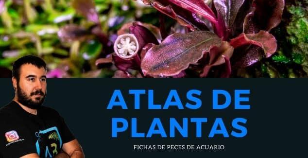 ATLAS DE PLANTAS