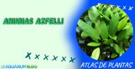 ANUBIAS-AZFELLI