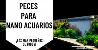 Peces para Nanoacuarios