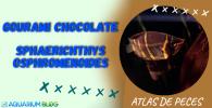 Ficha gourami chocolate